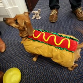 Hot dog-dog
